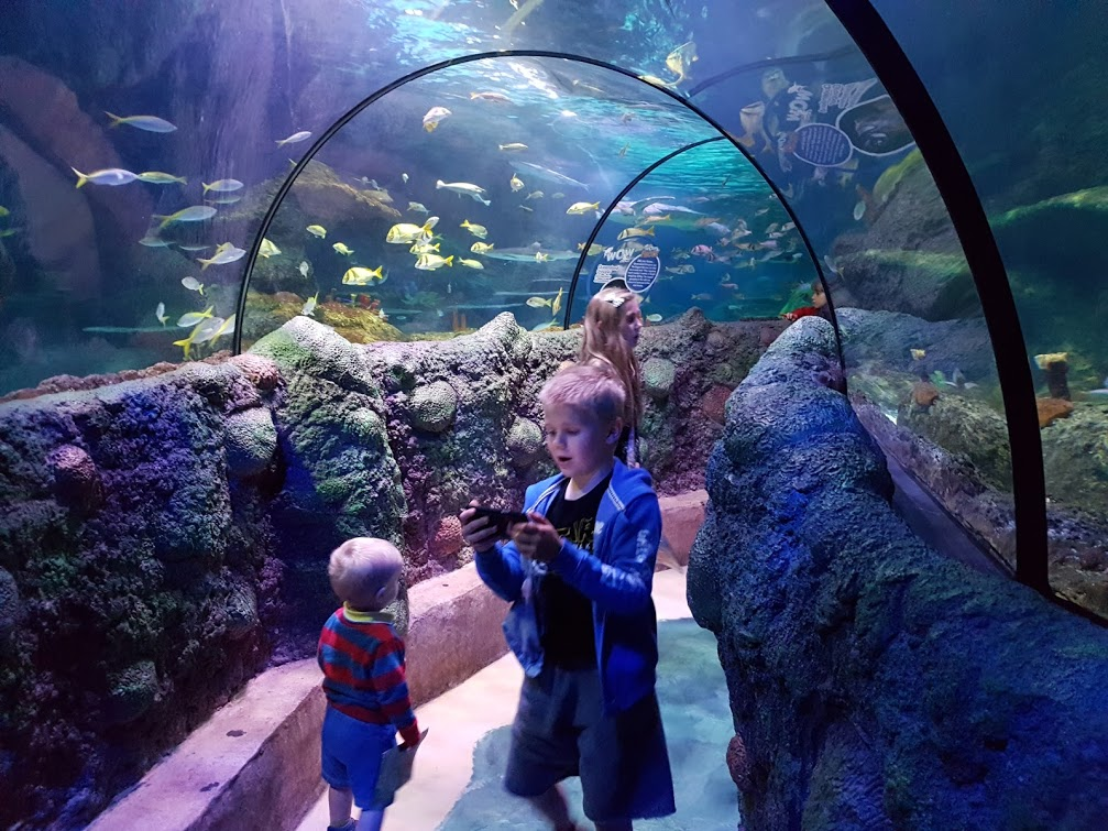 sea life big tunnel