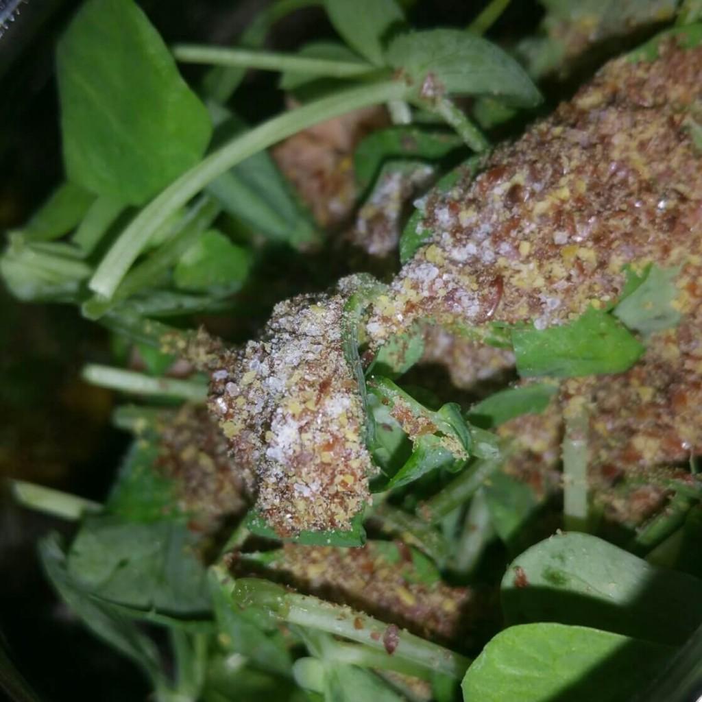 Jam jar salads