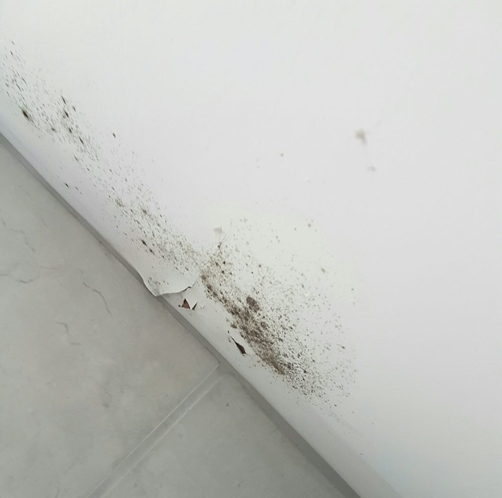 bathroom mould