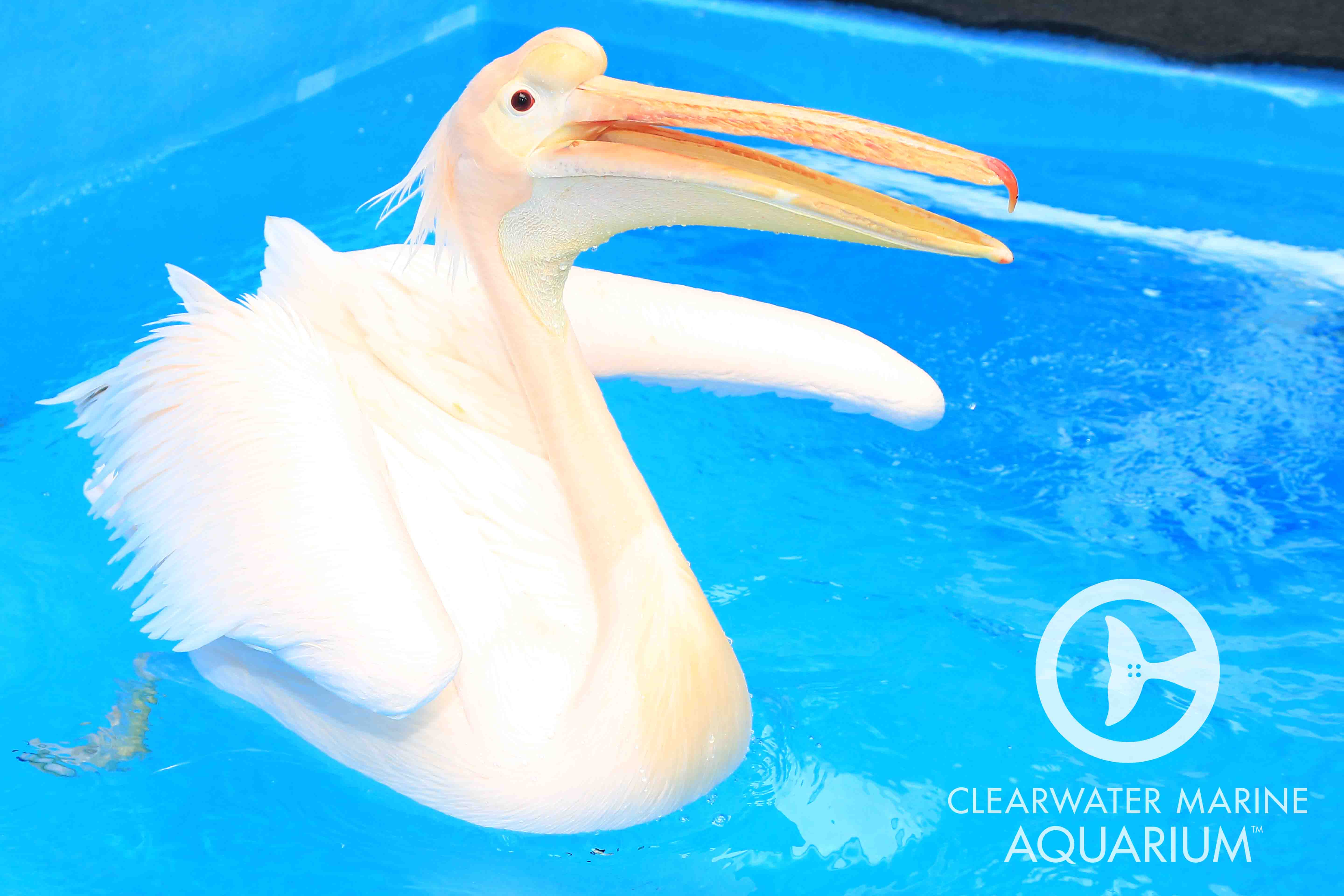 Clearwater Marine Aquarium home of Winter and Hope