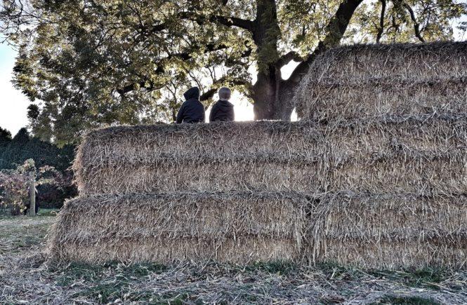 boys sat on straw bales